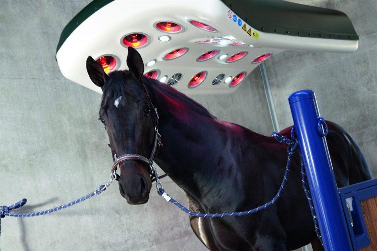 Horse solarium Sublime