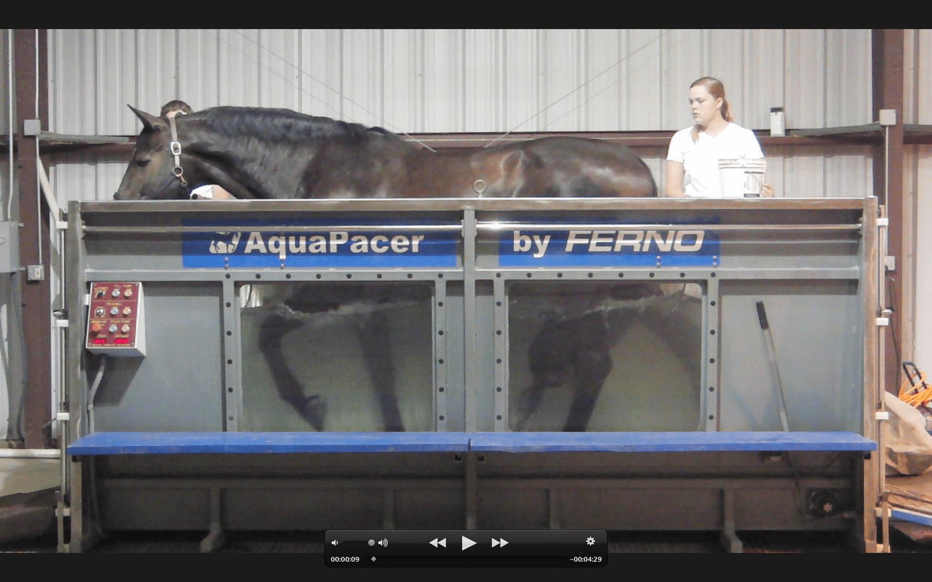 horse utilizing aquapacer machine