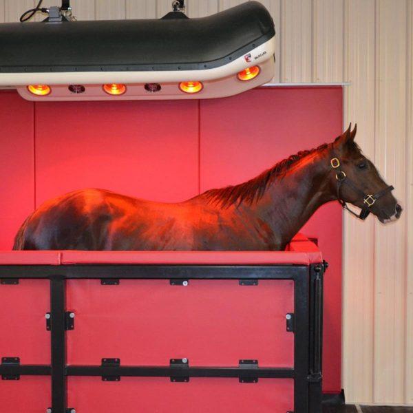 horse underneath solarium and in a vm1 enclosure