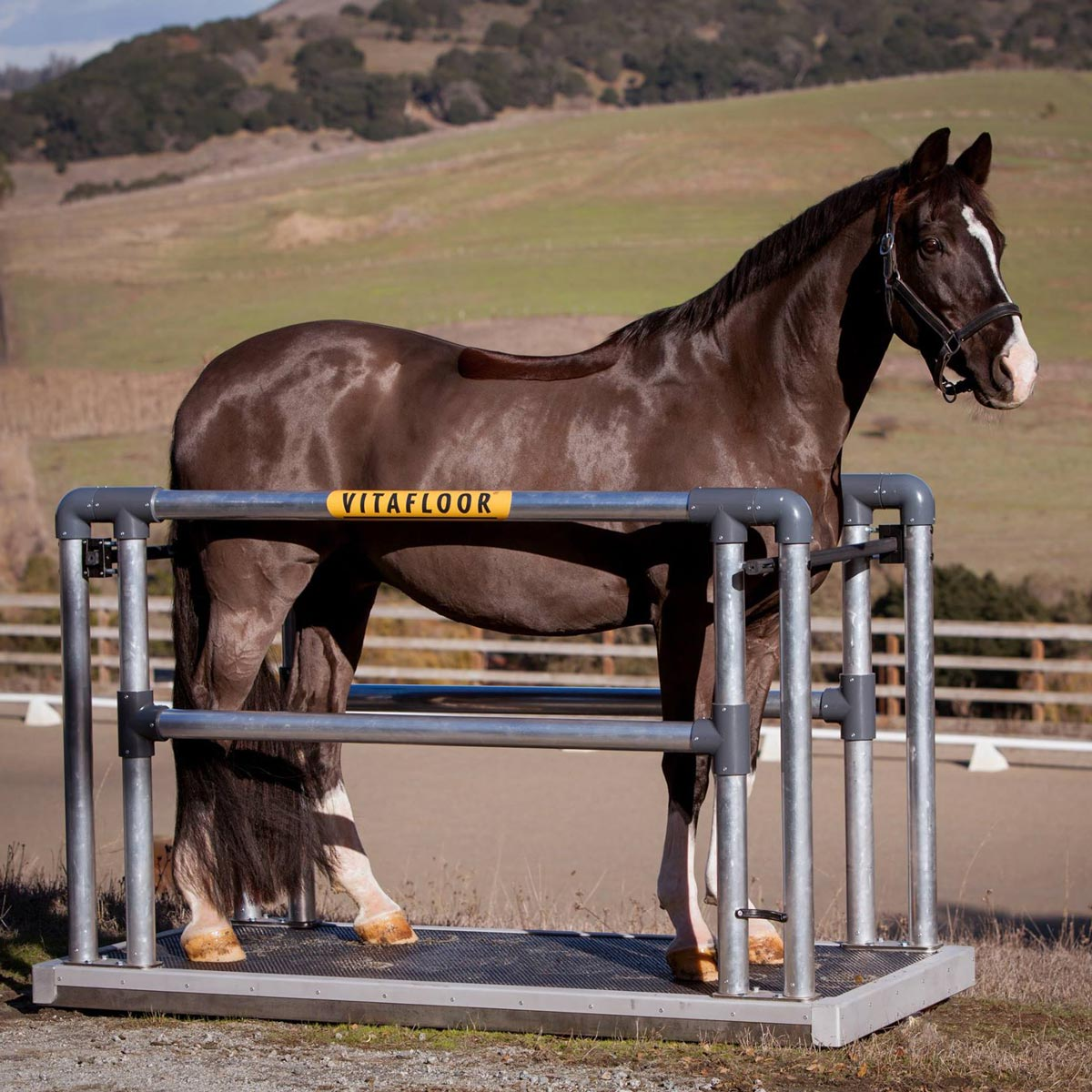 vitafloor equine vibration therapy system