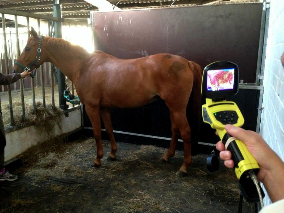 horse vibration platform comparison