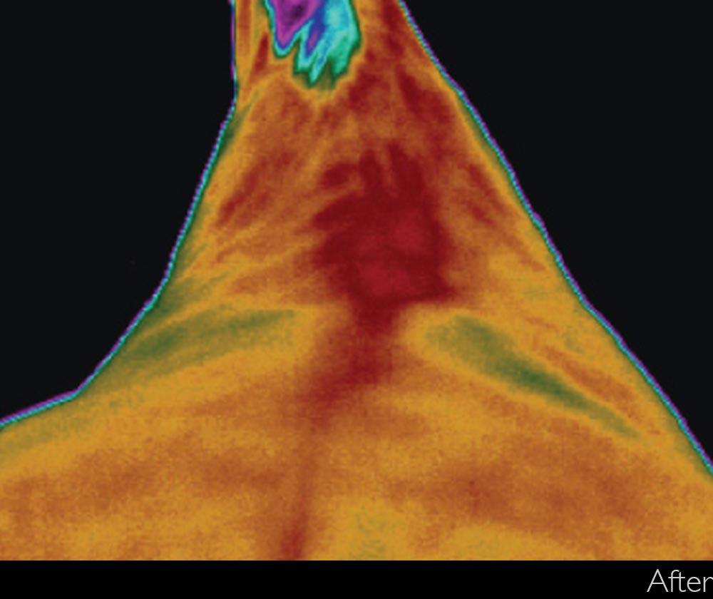 Thermal scan before using vitafloor