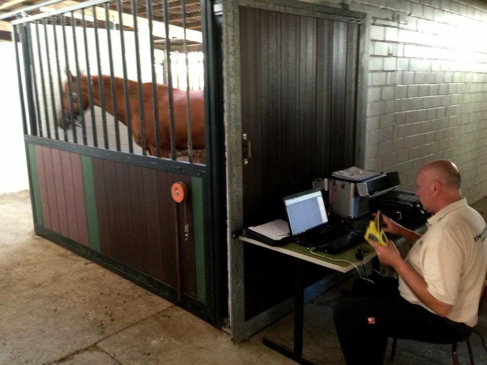 horse in enclosure using vibration platform