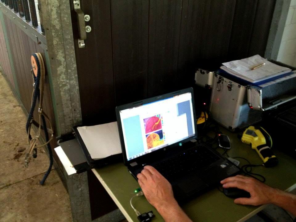 thermal scan performed on horse using vitafloor