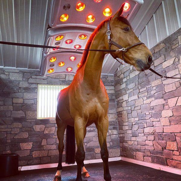 horse under maxuss solarium