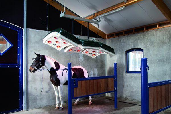 horse using solarium installation in stable