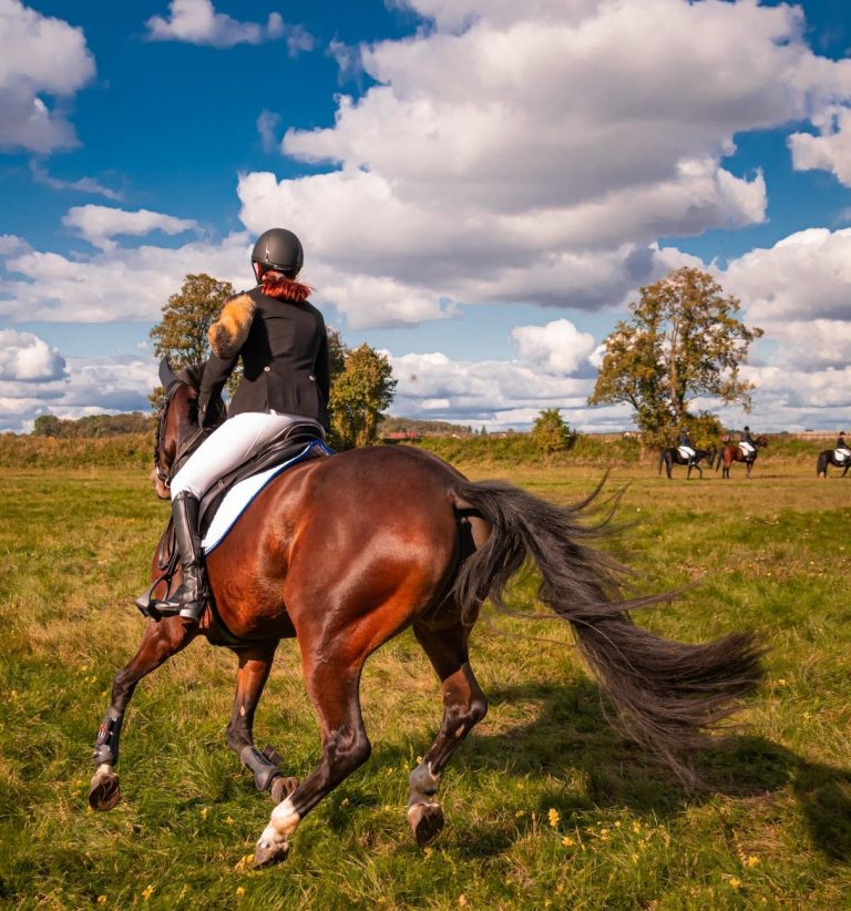 female horse rider riding her brown horse