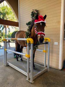 horse in christmas gear on vitafloor