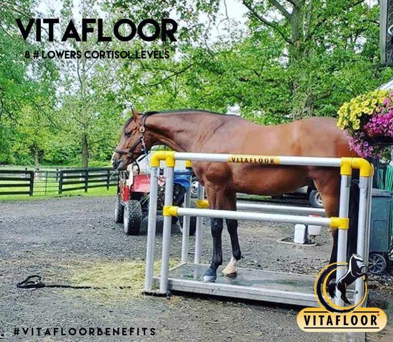Vitafloor vibration therapy for horses