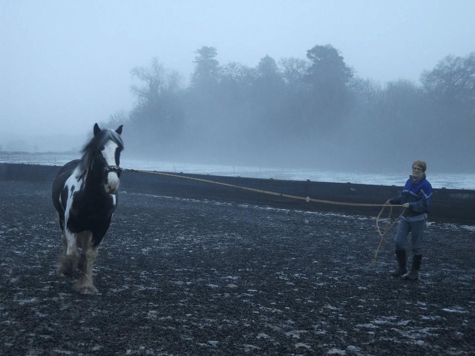 black and white horse running