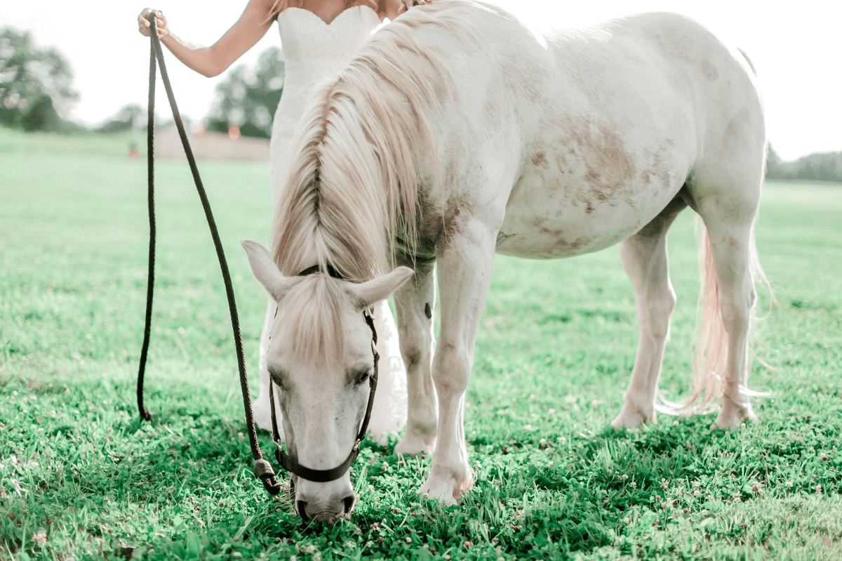 Woman Holding white Horse Reigns