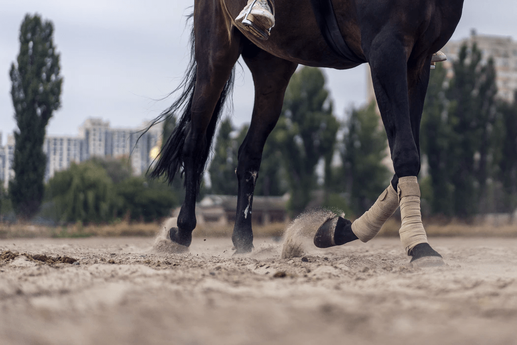 walking horse with rider in sand dust