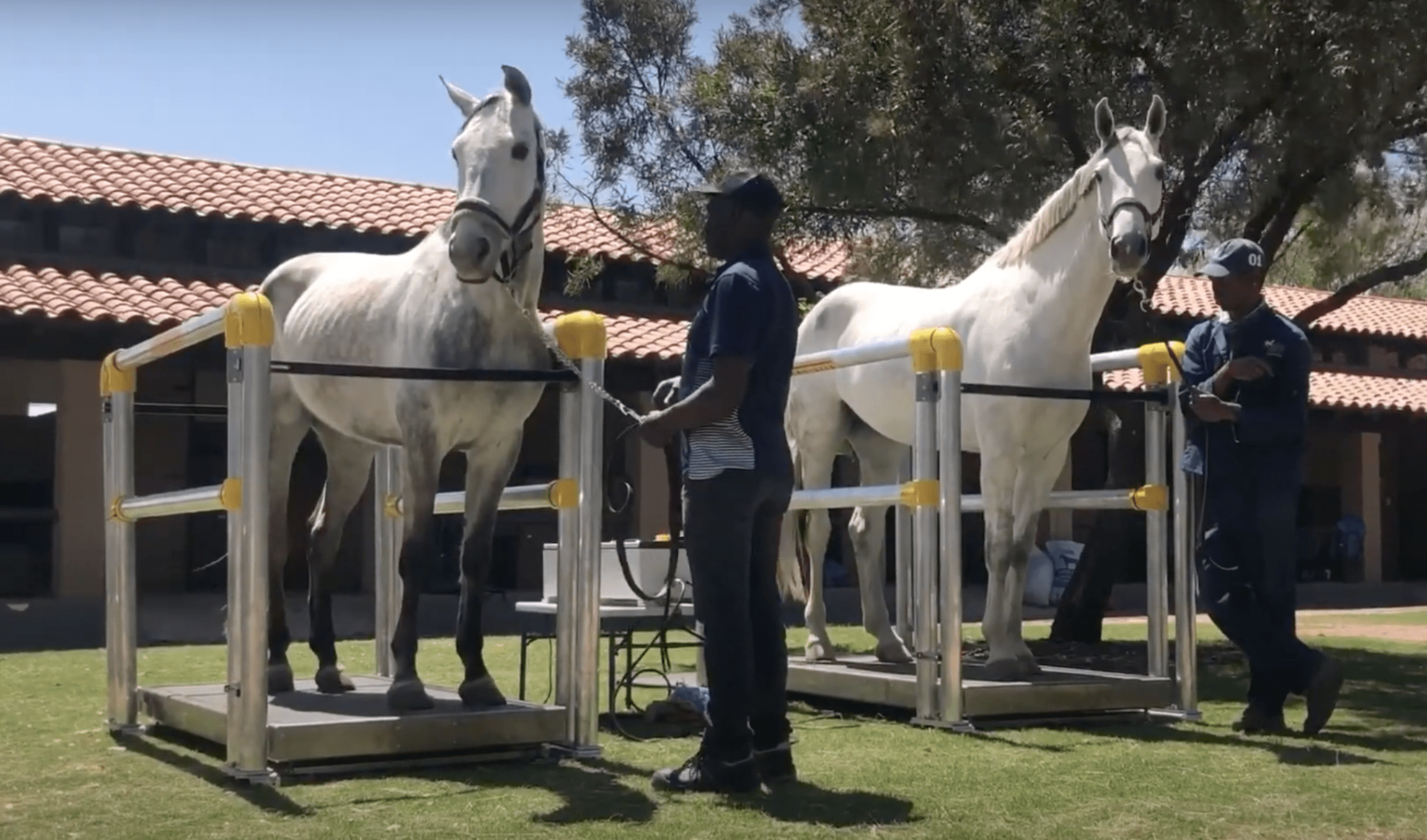 Equine Vibration Therapy