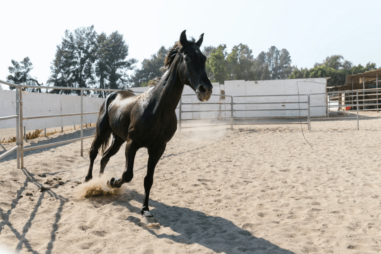 a training of the horse running in a small circle